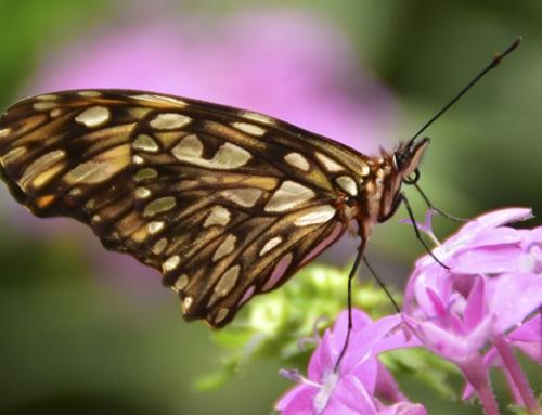 La magia de las mariposas